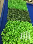 Backdrop Grass Leaves For Sale | Garden for sale in Adenta Municipal, Greater Accra, Nigeria