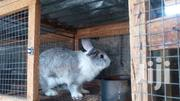 Quality Premium Rabbits | Livestock & Poultry for sale in Greater Accra, Ga East Municipal