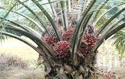 Palm Nut Fruit | Landscaping & Gardening Services for sale in Central Region, Awutu-Senya