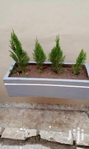 Landscaping | Landscaping & Gardening Services for sale in Greater Accra, South Shiashie