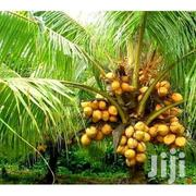 Coconut Trees | Feeds, Supplements & Seeds for sale in Greater Accra, Adenta Municipal