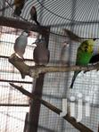 Finches And Parrots | Birds for sale in Odorkor, Greater Accra, Nigeria