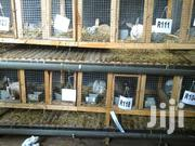 Big Rabbits | Livestock & Poultry for sale in Greater Accra, Adenta Municipal
