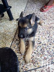 Shepherd Puppies | Dogs & Puppies for sale in Greater Accra, Tema Metropolitan