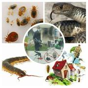 Bedbugs Fumigation Services | Automotive Services for sale in Greater Accra, Dzorwulu