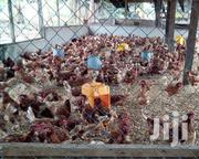 Brown Layer Birds For Sale | Livestock & Poultry for sale in Greater Accra, Accra Metropolitan