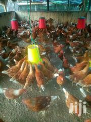 Brown Layers For Sale | Livestock & Poultry for sale in Greater Accra, Accra Metropolitan