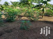 A Registered And Walled Land For Sale   Land & Plots For Sale for sale in Central Region, Awutu-Senya