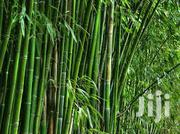 Fresh Bamboo | Building Materials for sale in Eastern Region, East Akim Municipal