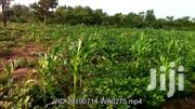 FOR SALE 6,000+ Acres Of Irrigable Farmland In The BRONG AHAFO REGION | Land & Plots For Sale for sale in Brong Ahafo, Kintampo North Municipal