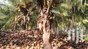 Dry Coconut | Feeds, Supplements & Seeds for sale in Western Region, Wasa Amenfi West