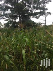 30FT X 165FT Plot of Land at Two Streams Pantoase Koforidua   Land & Plots For Sale for sale in Eastern Region, Akuapim North