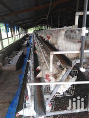 Battery Cage System | Farm Machinery & Equipment for sale in Ashanti, Kumasi Metropolitan