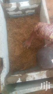 Biofil-digester Construction | Other Repair & Constraction Items for sale in Greater Accra, Tema Metropolitan