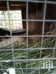 Grass Cutters | Other Animals for sale in Greater Accra, Ga West Municipal
