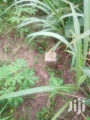 Land for Sale at Kodie Apagya | Land & Plots For Sale for sale in Ashanti, Kumasi Metropolitan