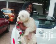 Pure Breed | Dogs & Puppies for sale in Greater Accra, North Ridge
