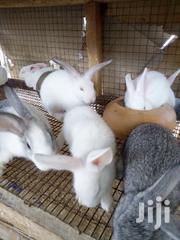 Rabbits | Livestock & Poultry for sale in Greater Accra, Asylum Down