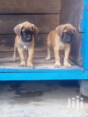 Mastiff Puppy | Dogs & Puppies for sale in Greater Accra, Accra Metropolitan