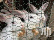 Weaners Available For Sale | Livestock & Poultry for sale in Ashanti, Obuasi Municipal