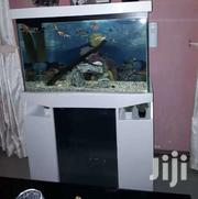 Aquarium | Fish for sale in Greater Accra, East Legon