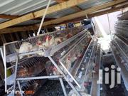 Chicken Cages | Farm Machinery & Equipment for sale in Greater Accra, Ga West Municipal