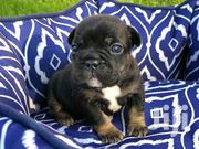 Puppies | Dogs & Puppies for sale in Eastern Region, Birim South
