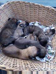 Dog Puppies | Dogs & Puppies for sale in Ashanti, Kumasi Metropolitan