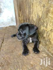 Nice Dog For Sale | Dogs & Puppies for sale in Greater Accra, East Legon