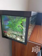 1 X 4 Feet Aquarium For Sale | Pet's Accessories for sale in Greater Accra, Achimota