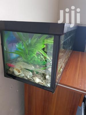 1 X 4 Feet Aquarium For Sale