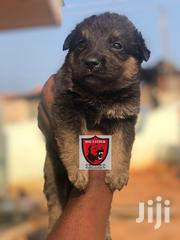 German Shepherd Puppy | Dogs & Puppies for sale in Greater Accra, Kwashieman