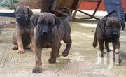 German Shepered Caucasian Shepherd Puppies | Dogs & Puppies for sale in Greater Accra, Ga East Municipal