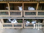 Male And Female Rabbits | Other Animals for sale in Greater Accra, Nungua East