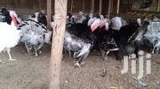 Day Old Turkeys For Sale | Livestock & Poultry for sale in Ashanti, Kumasi Metropolitan