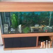 Aquariums | Fish for sale in Greater Accra, East Legon