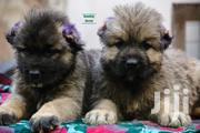 Caucasian Shepherd | Dogs & Puppies for sale in Greater Accra, Airport Residential Area