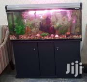 Aquarium | Fish for sale in Greater Accra, Agbogbloshie