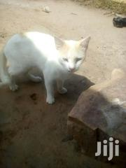 Nice Home Cut | Cats & Kittens for sale in Greater Accra, Ashaiman Municipal