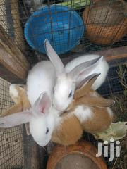 Rabbits For Sale | Livestock & Poultry for sale in Greater Accra, Dansoman