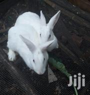 Rabbits For Sale | Other Animals for sale in Greater Accra, Tema Metropolitan