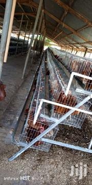 Chicken Cage | Farm Machinery & Equipment for sale in Greater Accra, Accra Metropolitan