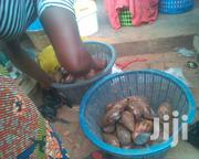 Good Snail For You Come And Have Your. | Livestock & Poultry for sale in Greater Accra, Ashaiman Municipal