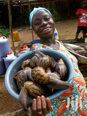 Snail Good | Other Animals for sale in Greater Accra, Ashaiman Municipal