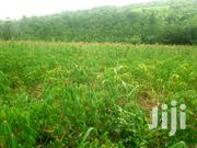 15 Acres of Farmland | Land & Plots For Sale for sale in Eastern Region, New-Juaben Municipal