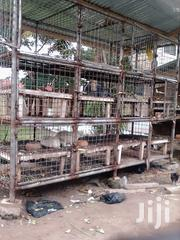 Rabbit And Grasscutter Cage | Farm Machinery & Equipment for sale in Ashanti, Kumasi Metropolitan