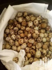 Quail Eggs | Livestock & Poultry for sale in Eastern Region, Akuapim North