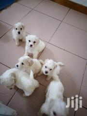 Puppies For Sale | Dogs & Puppies for sale in Greater Accra, Dzorwulu