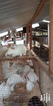 Vungard Farms | Other Animals for sale in Ashanti, Sekyere South
