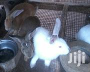 Rabbit Farm | Livestock & Poultry for sale in Greater Accra, Adenta Municipal